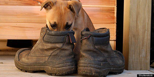 puppy in boots