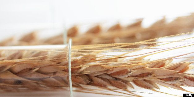 GMO Wheat: Is Genetically Modified Food Safe? | HuffPost Life