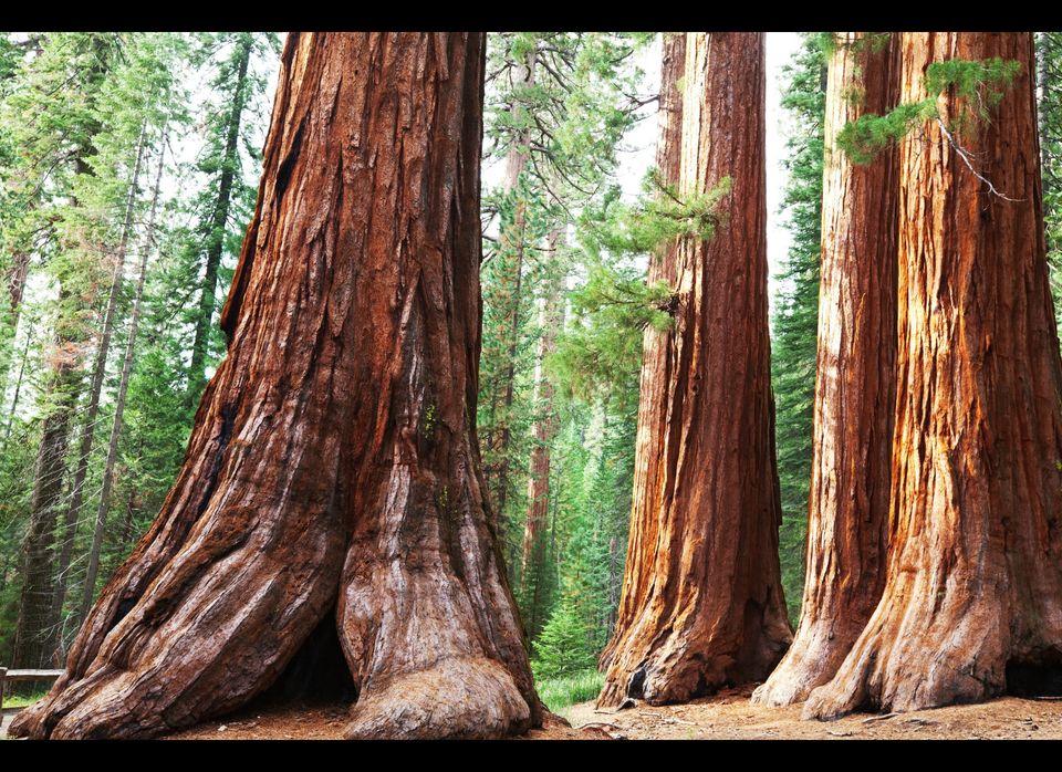 "<a href=""https://roadtrippers.com/places/sequoia-national-park-sequoia-national-park/50207ce9d0394a1c06000171"" target=""_hplin"