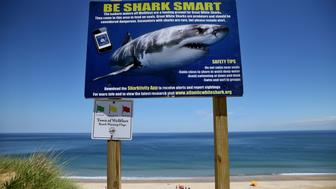 WELLFLEET, MA - JUNE 21: A shark warning sign stands at White Crest Beach in Wellfleet, MA on the first day of summer, June 21, 2018. (Photo by Craig F. Walker/The Boston Globe via Getty Images)