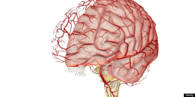 Migraines linked with abnormal blood vessel structure in the brain migraines linked with abnormal blood vessel structure in the brain ccuart Gallery