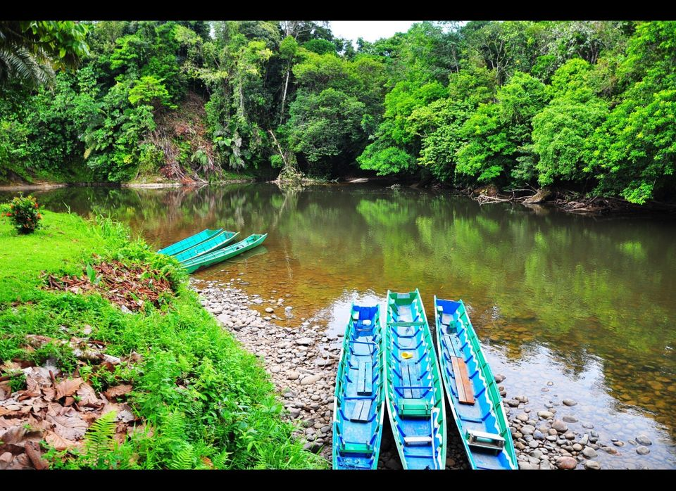 The Temburong River is shallow and moves slowly - perfect for families with zero boating skills who want to experience the ra