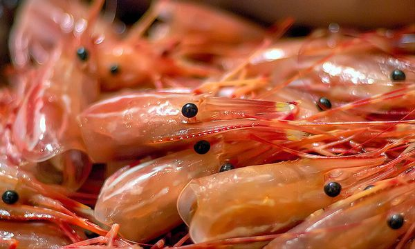 Shrimp heads and shells are like treasure chests of shrimp flavor. That's why shrimp taste better when you cook them in their