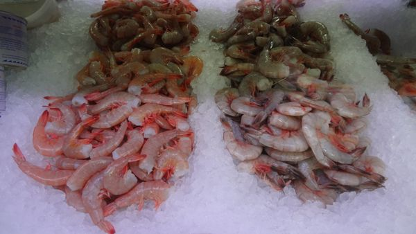Fresh shrimp are extremely perishable. You should try your absolute best to cook them within 24 hours of purchasing them. If
