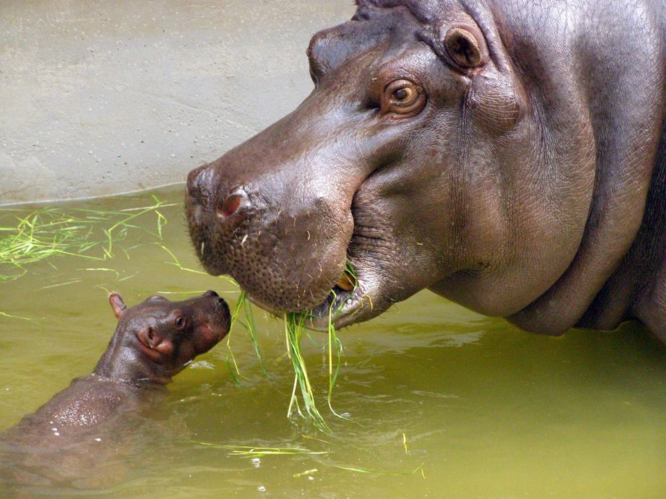 I told you I refuse to eat this pond scum! I want real food!