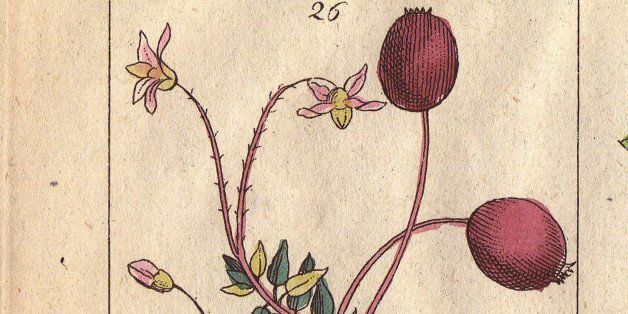 ITALY - SEPTEMBER 16:  Cranberry, Vaccinium oxycoccos, cowberry, V. vitis idaea and bog bilberry, V. uliginosum. Handcolored copperplate engraving of a botanical illustration by J. Schaly from G. T. Wilhelm's Unterhaltungen aus der Naturgeschichte' (Encyclopedia of Natural History) Vienna 1816. Gottlieb Tobias Wilhelm (1758-1811) was a Bavarian clergyman and naturalist in Augsburg where the first edition was published.'  (Photo by Florilegius/SSPL/Getty Images)