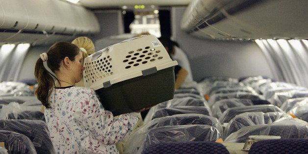 LOS ANGELES, CA - SEPTEMBER 19:  Cats and dogs that were rescued after being separated from their owners when Hurricane Katrina hit the New Orleans area of the Gulf Coast arrive by chartered jet to Los Angeles International Airport (LAX) on September 19, 2005 in Los Angeles, California. The approximately 200 animals are being taken in by the Society for the Prevention of Cruelty to Animals Los Angles (SPCALA) to be tested, examined, vaccinated, and distributed to animal agencies in Southern California. Rescuers hope to be able to reunite as many of the animals as possible with their owners.  (Photo by David McNew/Getty Images)