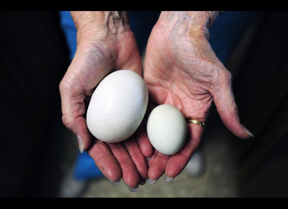 """Cookie Smith shows off a normal egg and a """"super egg"""" Wednesday, May 30, 2012, in Abilene, Texas. Cookie Smith went to collec"""