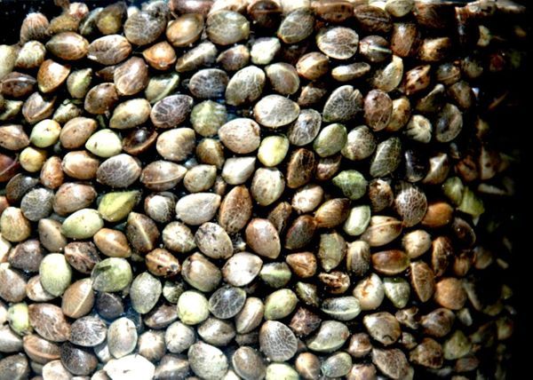 """<strong>What Is It?</strong> Another great vegetarian source of protein, these """"seeds"""" (they are actually a tiny fruit!) are"""