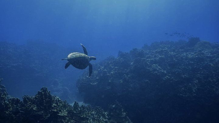 Saipan's underwater world is rich and amazing -- because of this, plus warm water and great visibility, the scuba diving is s