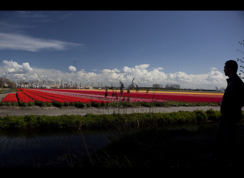 Tourists admire fields of blossoming tulips near Noordwijk, western Netherlands, Sunday, April 22, 2012. Holland is the world