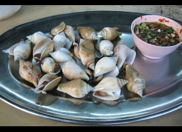 This type of sea snail is the most popularly eaten conch in Singapore and is also eaten in other areas of Southeast Asia like