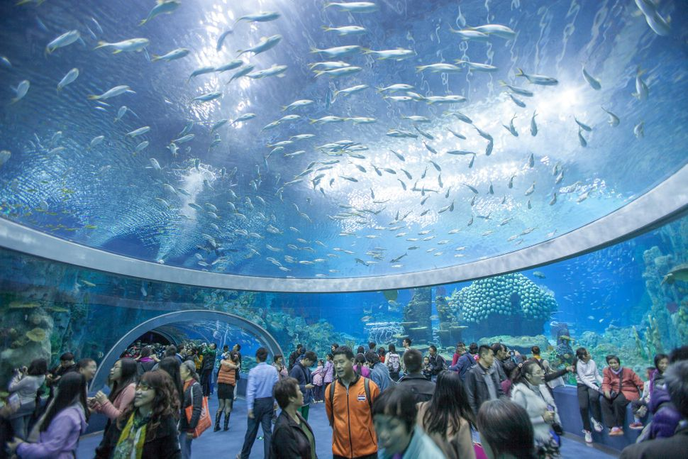 "(<a href=""http://www.guinnessworldrecords.com/news/2014/3/chinas-hengqin-ocean-kingdom-confirmed-as-worlds-largest-aquarium-a"