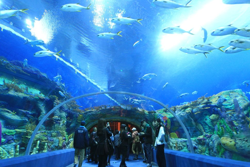 Tourists visit the worlds biggest aquarium at Chimelong Ocean Kingdom, the largest ocean theme park in the world, in Hengqin