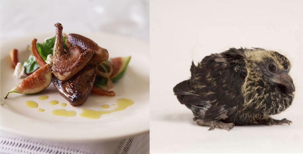 "Squab is a young, domesticated pigeon. Squabs are usually eaten at about <a href=""http://www.gourmet.com/food/2008/09/eating-"