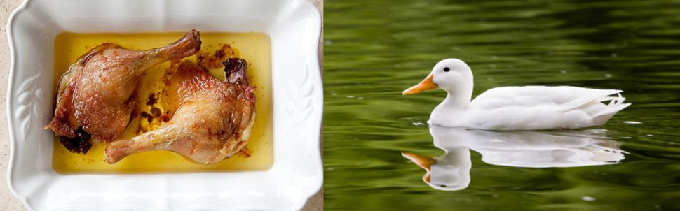 Duck has the most fat per square inch of any other kind of fowl, which makes it one of the tastiest. We're big fans of <a hre