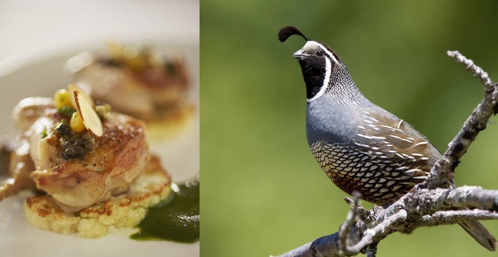 Quail refers to an order of mid-sized birds called Galliformes. The birds have dark, gamey meat.