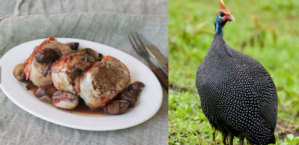 "Guinea fowl has dark, juicy meat. It is popular in Canada and Britain and is ""<a href=""http://www.nytimes.com/2013/02/13/dini"