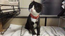 인간의 해코지로 귀를 잃은 새끼 고양이가 새로운 묘생을 시작했다