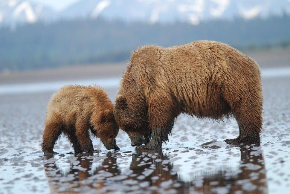 "<a href=""https://instagram.com/p/4CRbfngu7F/"" target=""_blank"">A mother and baby bear at Lake Clark National Park.</a>"