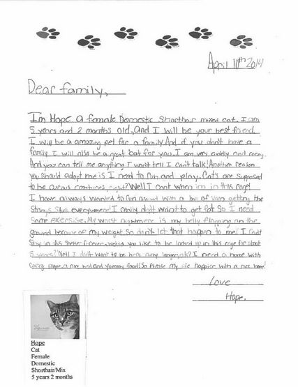<em>Dear family, <br> I'm Hope a female domestic shorthair mixed cat. I am 5 years and 2 months old, and I will be your best