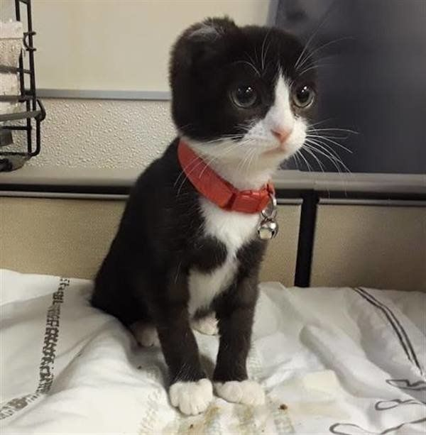 Katze wurden Ohren abgeschnitten – dann hat Pflegerin kreative