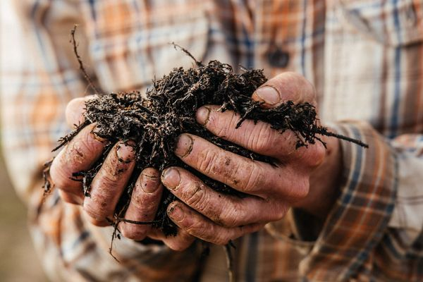 There's something natural about knowing that your food was planted, grown and harvested by an actual human. It connects us to