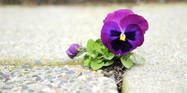 How To Bloom Where You Are Planted Huffpost Life