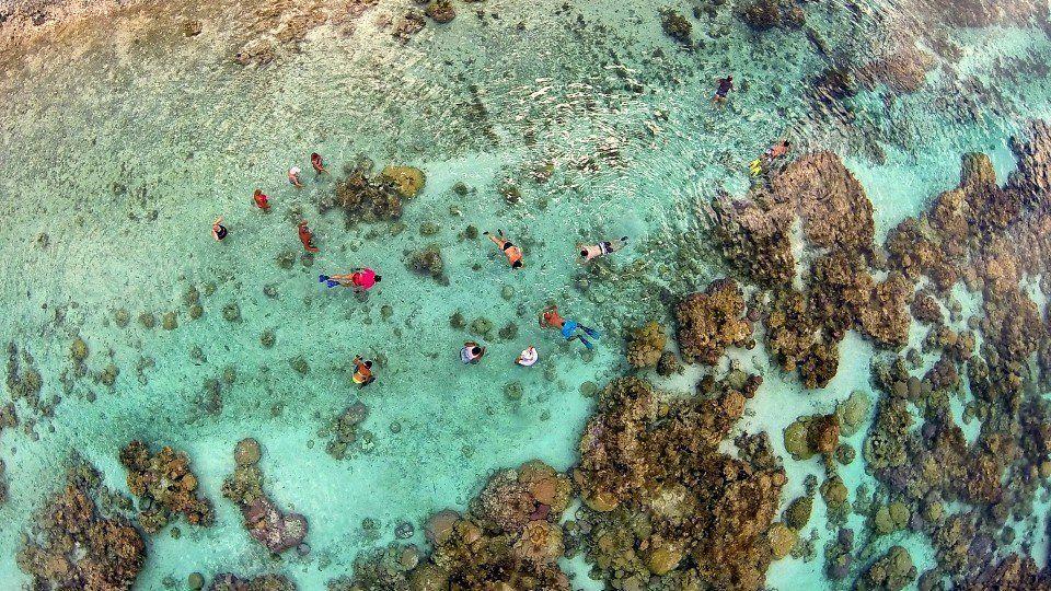 """Snorkeling in the coral garden of Taha'a lagoon (<a href=""""http://www.dronestagr.am/jardin-de-corail-dans-le-lagon-de-tahaa-po"""