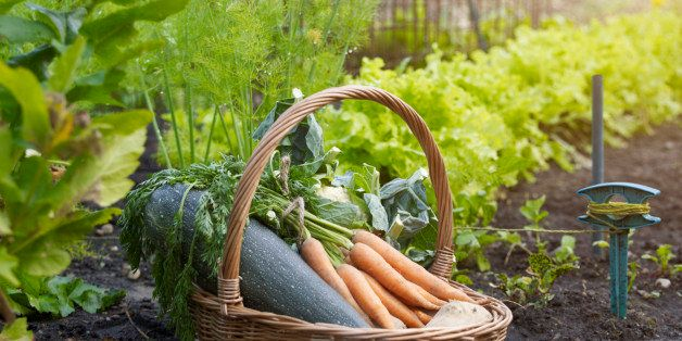 This Genius Cheat Sheet For Gardeners Tells Where And When To Plant Your Vegetables