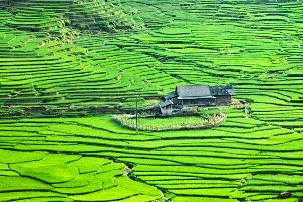 Sapa, a hill station in the Northwest of Vietnam, is one of the country's most stunning areas. Its dramatic rice terraces and