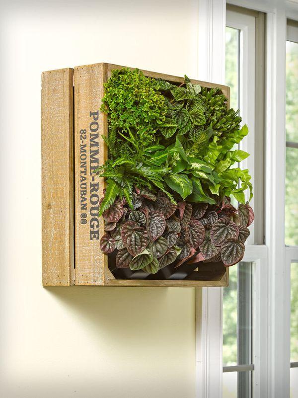 "<a href=""http://mypotsandplanters.com/wine-crate-wall-garden/"" target=""_blank"">Wine Crate Wall Garden</a>, $129.95"