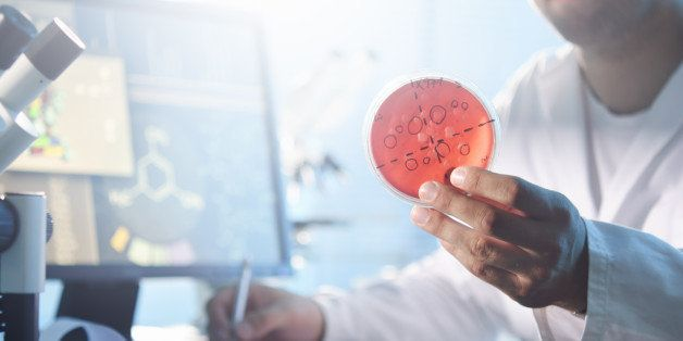 A scientist examining a petri dish containing bacterial cultures