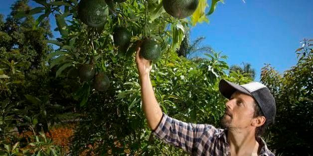 What We Can Learn From Jason Mraz And His Avocado Farm Huffpost Life
