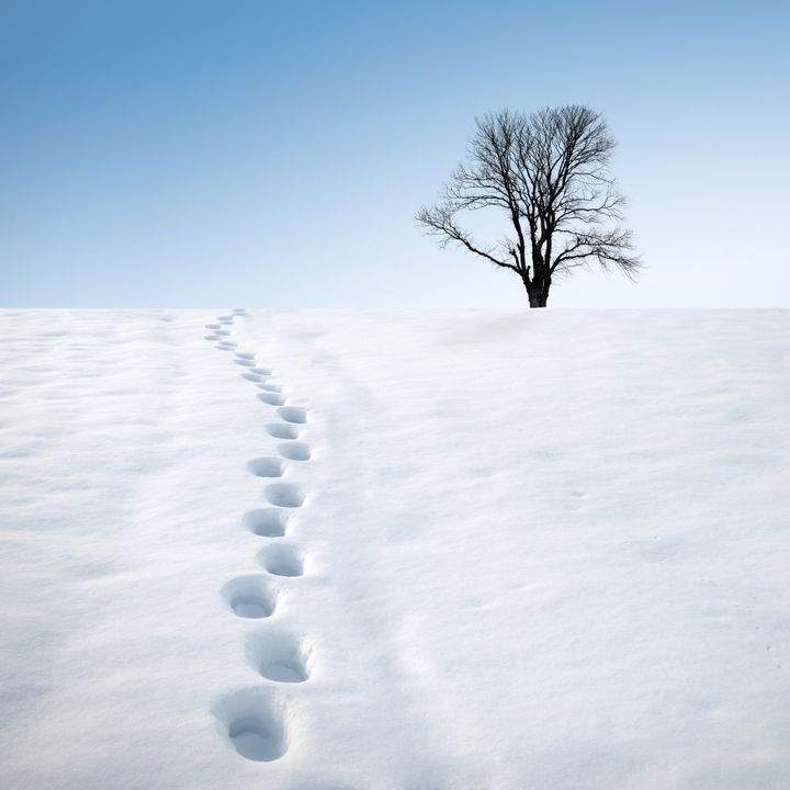 Footprints in deep snow and a tree on horizon. Winter landscape