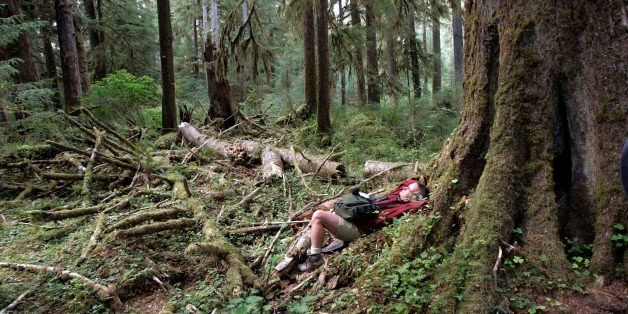 ** ADVANCE FOR WEEKEND OCT. 28-29 **Acoustic ecologist Gordon Hempton reclines at the base of a western hemlock and listens to the sounds of the forest Oct. 2, 2006, in the Hoh Rain Forest of Olympic National Park, Wash. Hempton's hope is that by protecting one square inch from man-made sound, a much larger part of the park will reap the benefits. (AP Photo/Elaine Thompson)