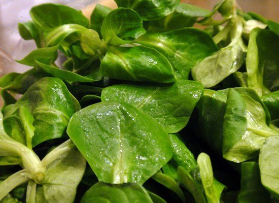 Mache (a.k.a. corn salad or lamb's lettuce) grows in a rosette shape with lobed leaves. It is tender with a mild flavor.  P