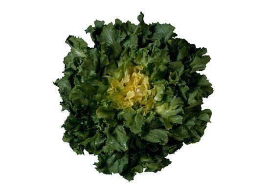 Escarole has broad, curly leaves. Its flavor is slightly bitter. Young leaves are great for salads, but more mature leaves ar