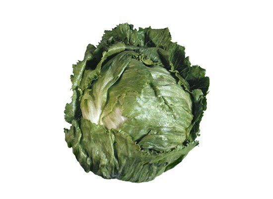 Iceberg is one of the most well known lettuces. It has crisp, pale green leaves that are almost white as you work your way to
