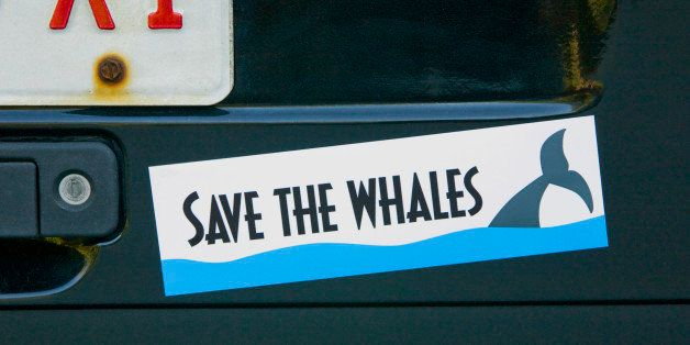 Save whales bumper sticker on car