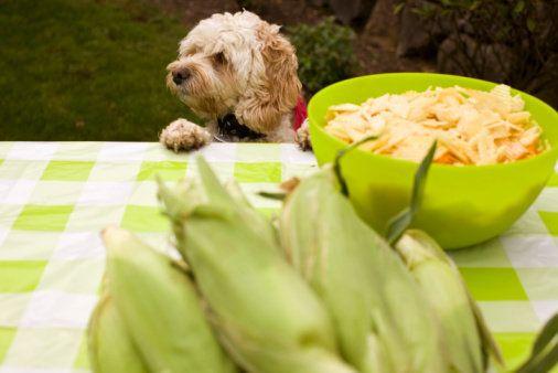 Green Veterinary Medicine: Veggies for Pets | HuffPost Life