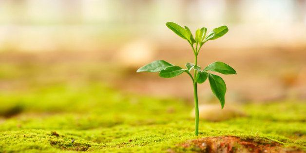 'green image for growth, hope, new life , environmental conservation etc.Other similar images'