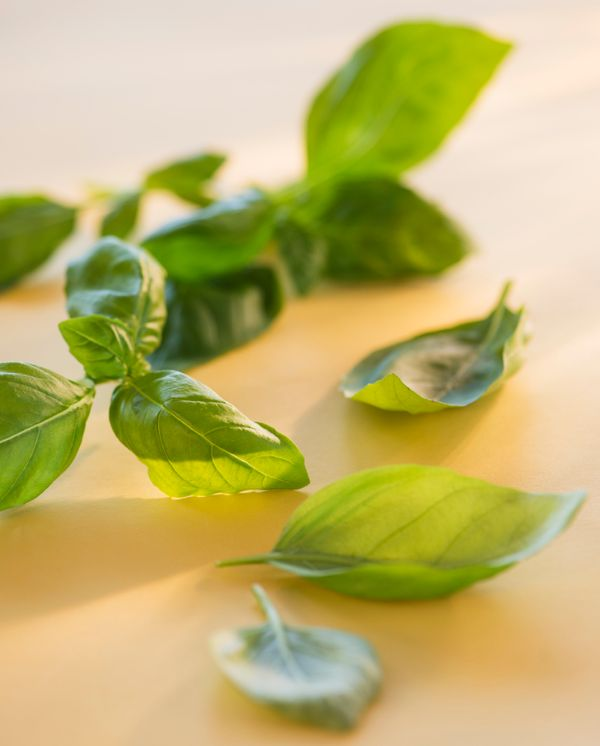 Basil has long been regarded as a natural laxative and home remedy for constipation, but most modern holistic websites just t