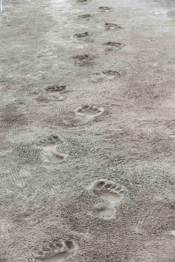 It's a little hard to get a sense of the scale of these footprints in this photo...