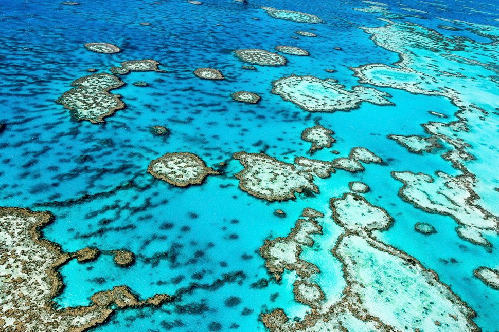 """The Great Barrier Reef, one of the world's <a href=""""http://www.unmuseum.org/7wonders/greatreef.htm"""" target=""""_blank"""">seven nat"""
