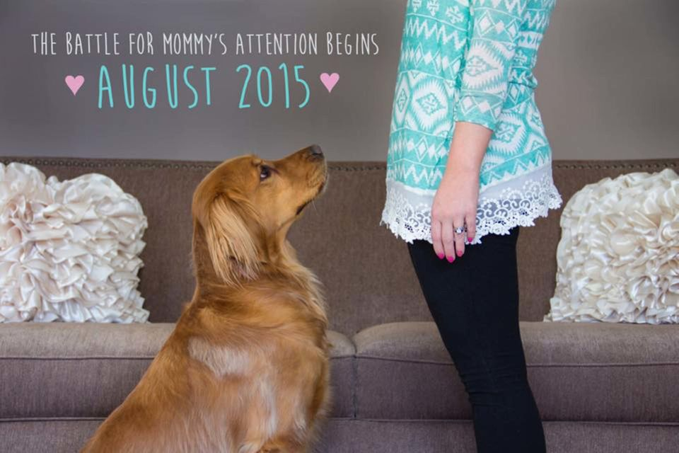 50 Adorable Dogs Who Shared Their Familys Pregnancy News In The
