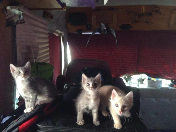 The Amazing Acro-Cats often travel with foster kittens, who are available for adoption. In fact, since Martin has a special f