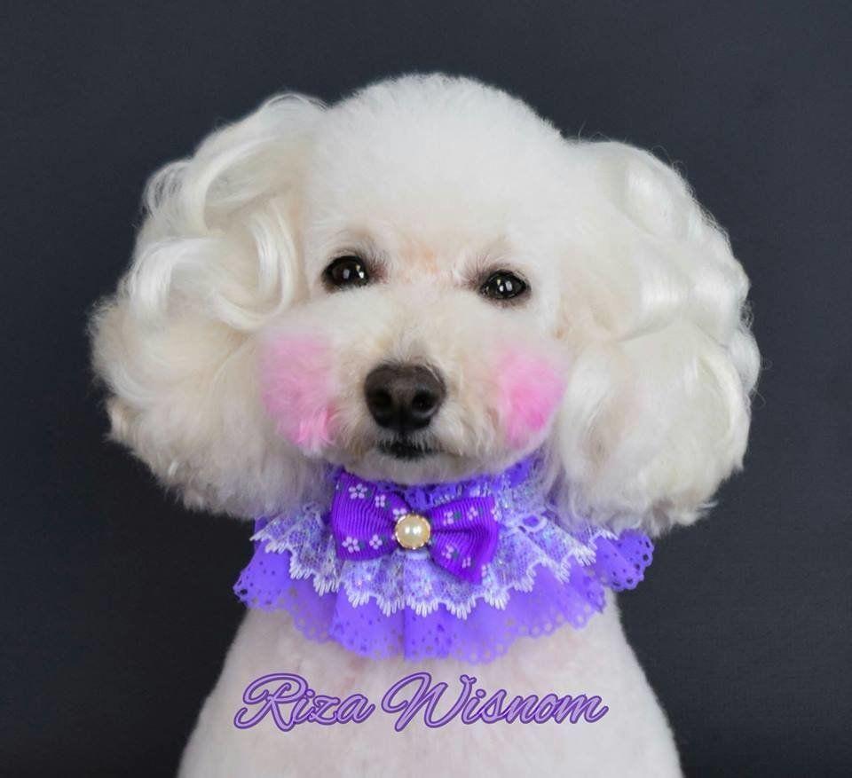 "<a href=""https://www.facebook.com/petstylingbyrizawisnom?fref=ts"">The Art of the Groom -- Pet Styling by Riza Wisnom</a>"