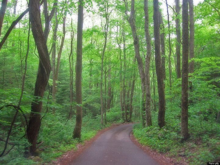 Hike Through Old Growth Forests to Undeveloped
