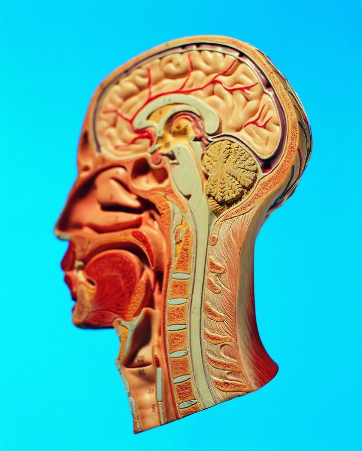 The Neuroscience of Pleasure | HuffPost